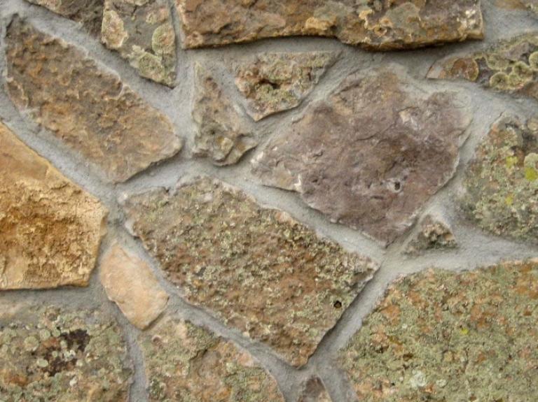 Alpina Moss Detail